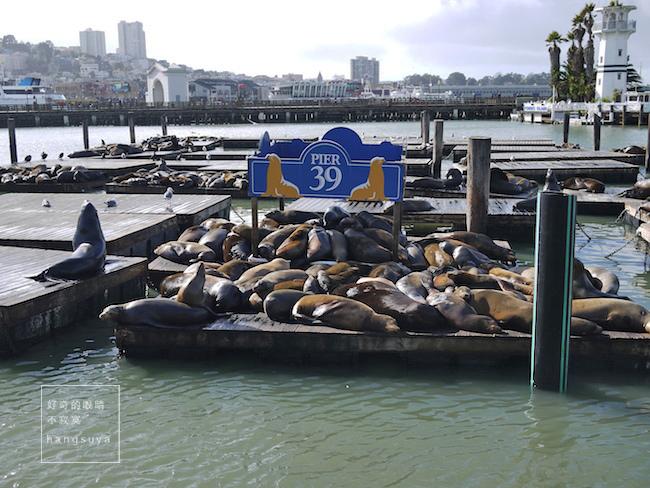 美西蜜月行|舊金山漁人碼頭 吃螃蟹喝酸麵包巧達湯 重點是看成群的海獅